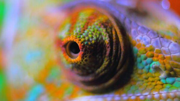 Un camaleón - Sputnik Mundo