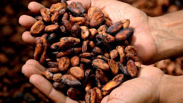 Grano de cacao - Sputnik Mundo