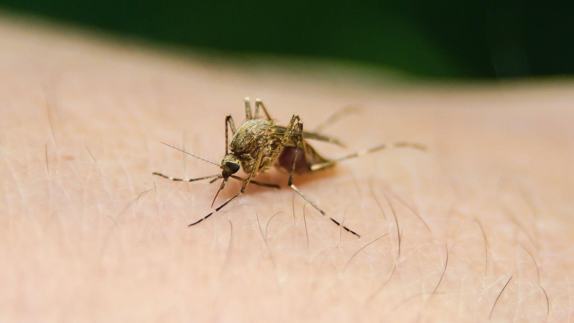 Un mosquito - Sputnik Mundo, 1920, 19.02.2021