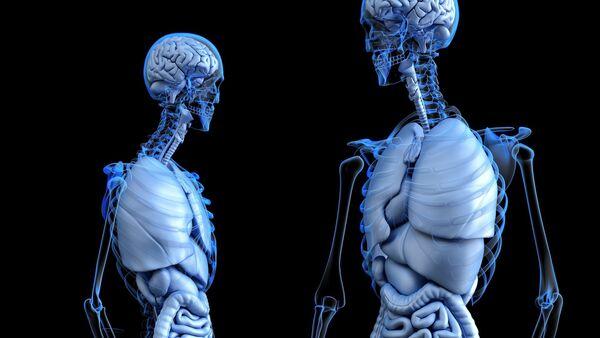 Cuerpo humano, imagen ilustrativa - Sputnik Mundo