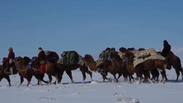 Ulán Bator – Londres: 12.000 kilómetros en camello - Sputnik Mundo