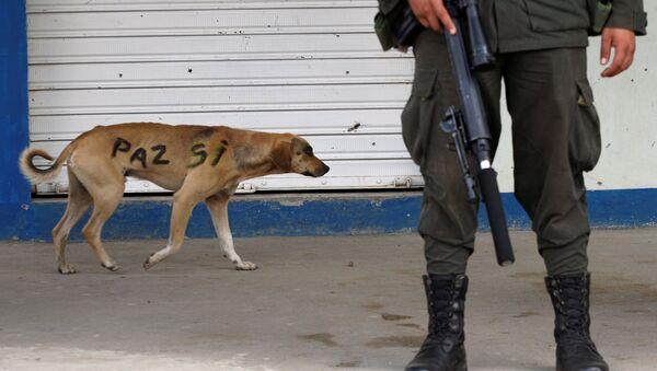 Un perro con las palabras paz sí en su lado en Colombia - Sputnik Mundo
