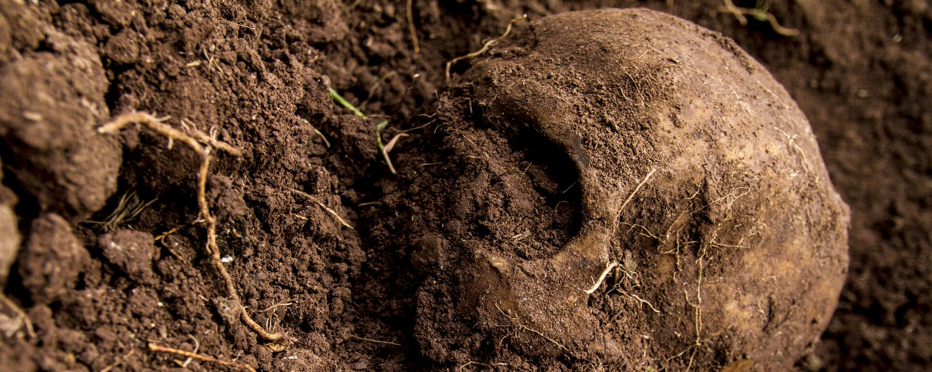 Cráneo hallado en una fosa  - Sputnik Mundo, 1920, 01.03.2021