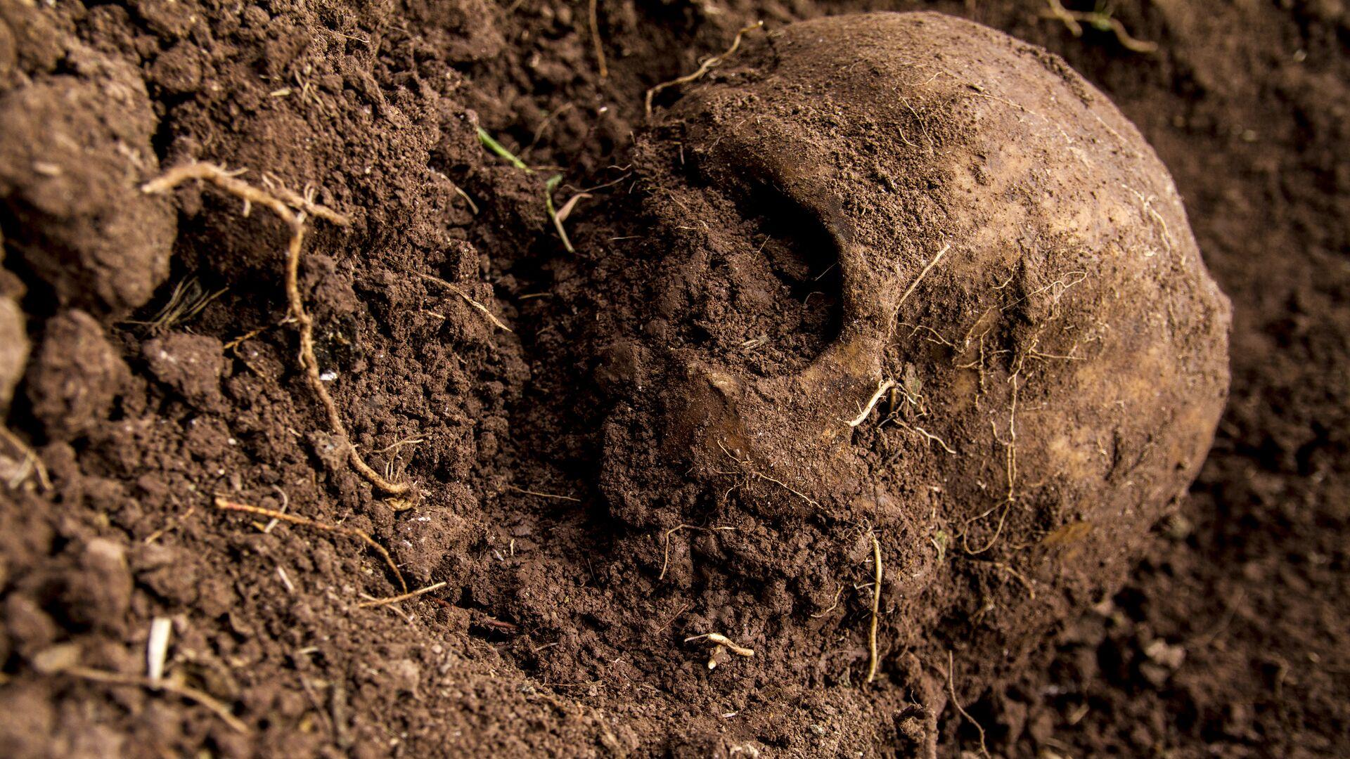 Un cráneo - Sputnik Mundo, 1920, 25.09.2021