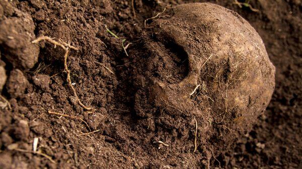 Cráneo hallado en una fosa clandestina, durante las búsquedas de familiares en el estado de Sinaloa, México - Sputnik Mundo