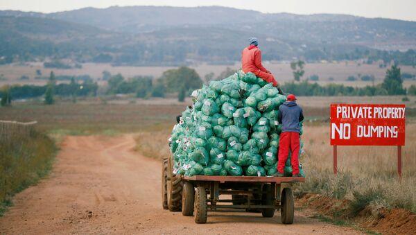 Trabajadores agrícolas cosechan col en una granja en Eikenhof, cerca de Johannesburgo, Sudáfrica - Sputnik Mundo