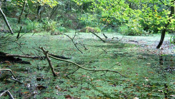 Un pantano (imagen ilustrativa) - Sputnik Mundo