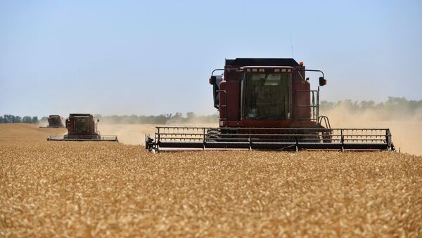 Recogida de la cosecha de trigo en Rusia - Sputnik Mundo