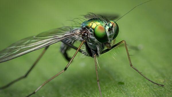Una mosca - Sputnik Mundo