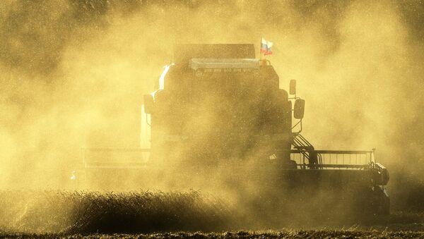 Recolección de la cosecha en Rusia - Sputnik Mundo