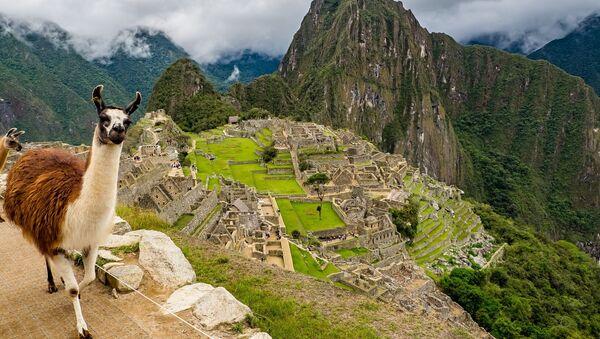 Una llama en Machu Picchu, Perú - Sputnik Mundo