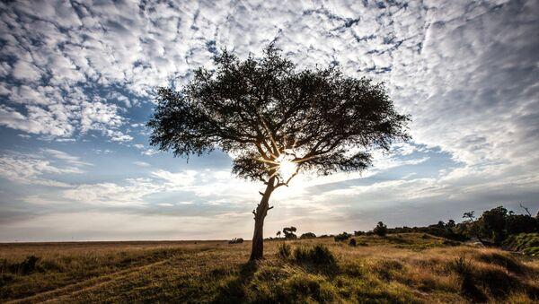 Reserva nacional Masai Mara en Kenia - Sputnik Mundo