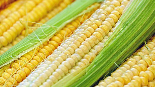 El maíz - Sputnik Mundo