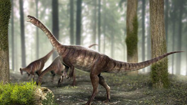 El dinosaurio de cuello largo más antiguo del mundo - Sputnik Mundo