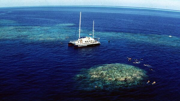 Tourists snorkel around Upolu Cay on the Great Barrier Reef near Cairns off the Australian north east coast - Sputnik Mundo