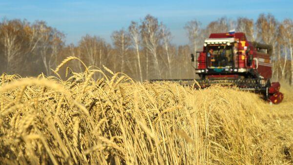 Cereales en Rusia - Sputnik Mundo