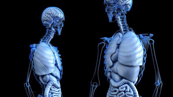 El cuerpo humano (ilustración)  - Sputnik Mundo