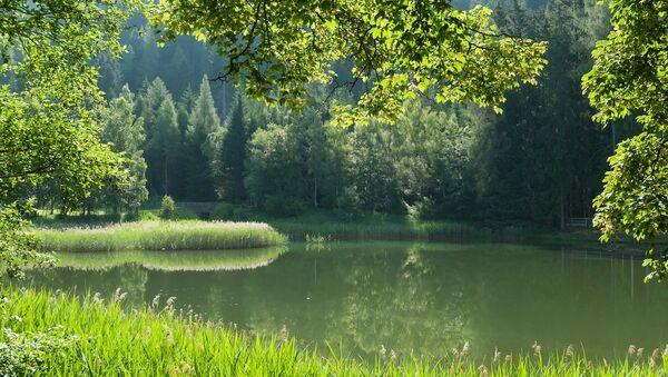 Un bosque (imagen referencial) - Sputnik Mundo
