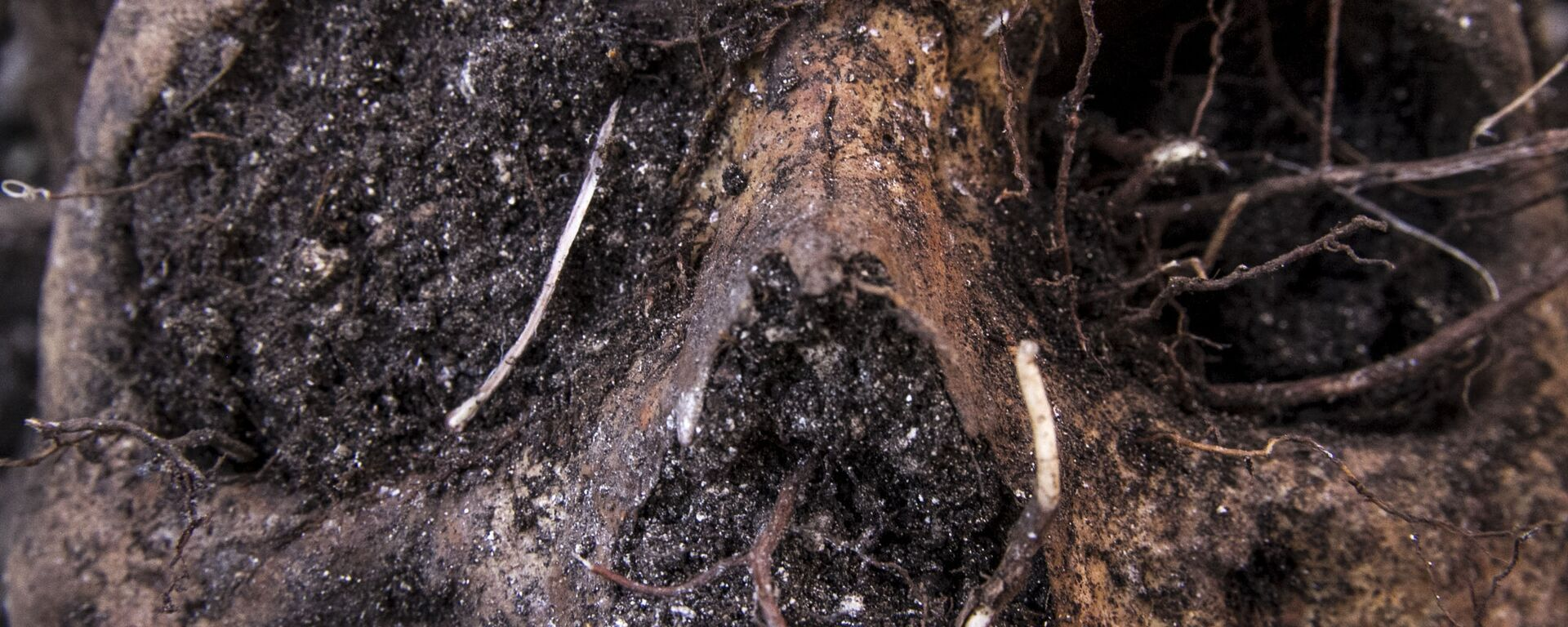 Huitzuco, Guerrero. Cráneo localizado en una fosa clandestina. - Sputnik Mundo, 1920, 07.07.2021
