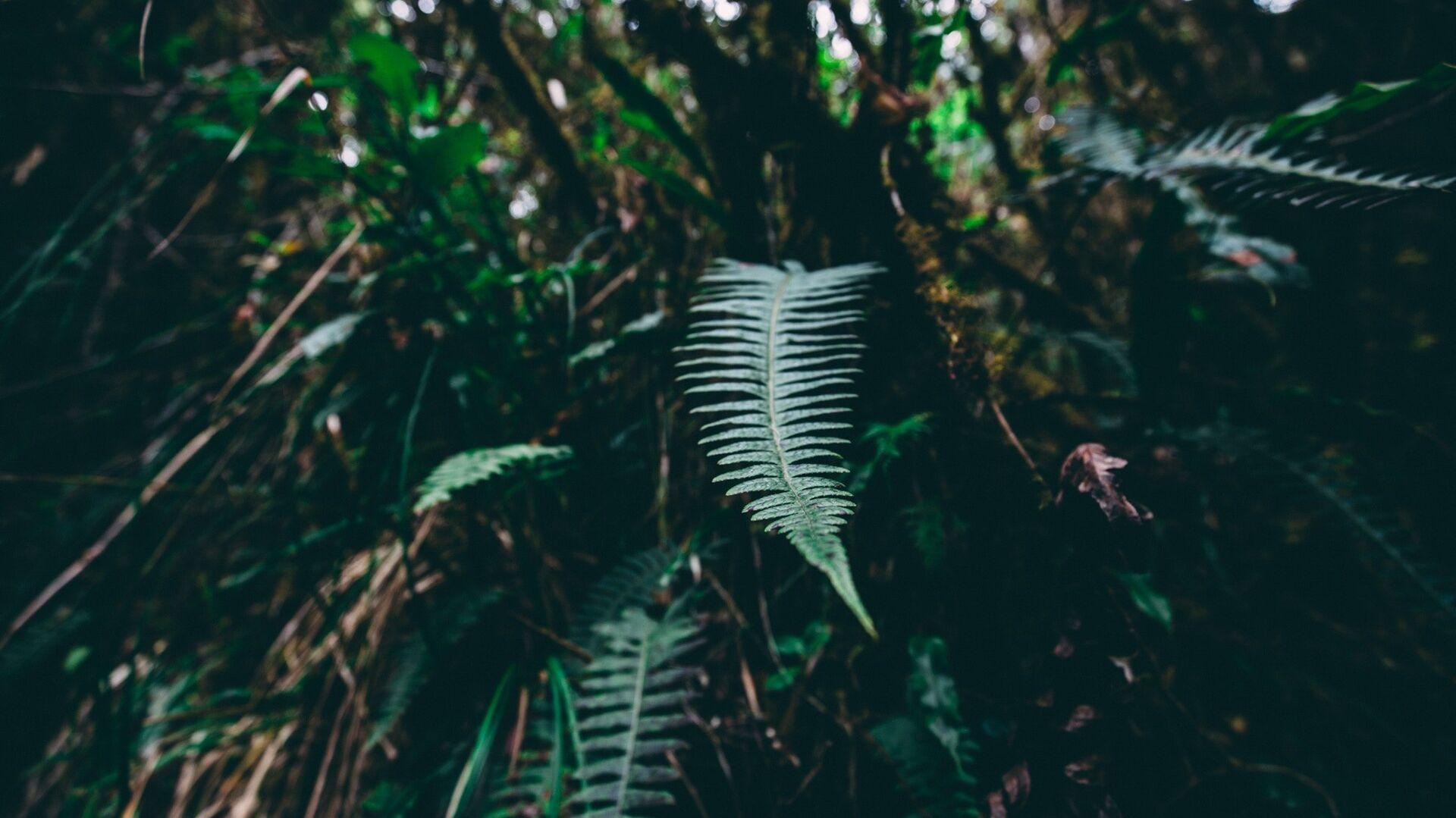 Bosque de Amazonía (imagen referencial) - Sputnik Mundo, 1920, 08.10.2021