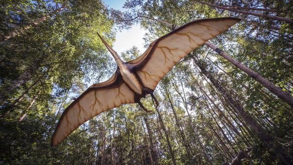 Pterosaurio - Sputnik Mundo