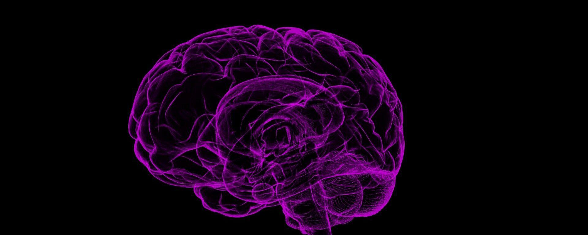 Cerebro (imagen referencial) - Sputnik Mundo, 1920, 29.01.2021