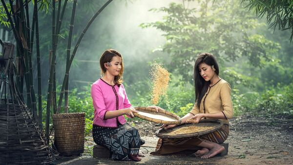 Mujeres seleccionan arroz - Sputnik Mundo