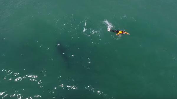 Nada en el mar y se encuentra con un tiburón delante - Sputnik Mundo