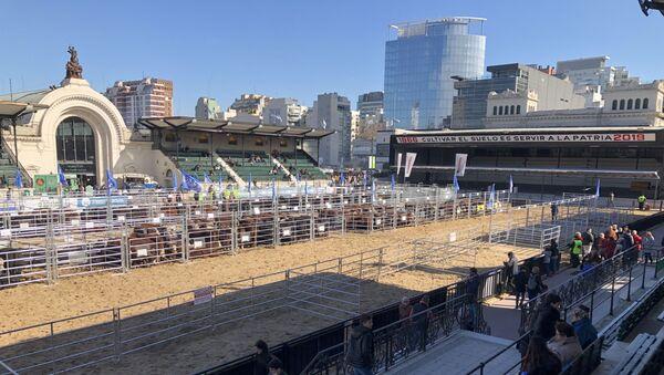 Predio de la Exposición Rural de Buenos Aires de 2019 - Sputnik Mundo