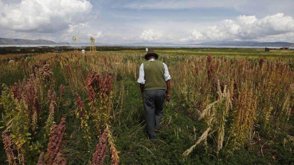 Bolivia cultivos - Sputnik Mundo