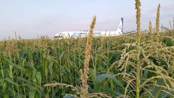 Un A321 aterriza de emergencia cerca de Moscú - Sputnik Mundo