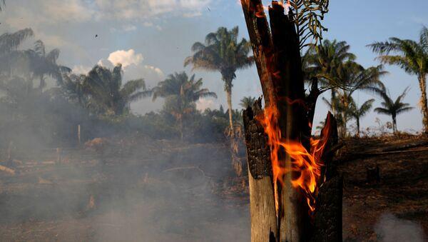 Incendios forestales en Amazonia - Sputnik Mundo