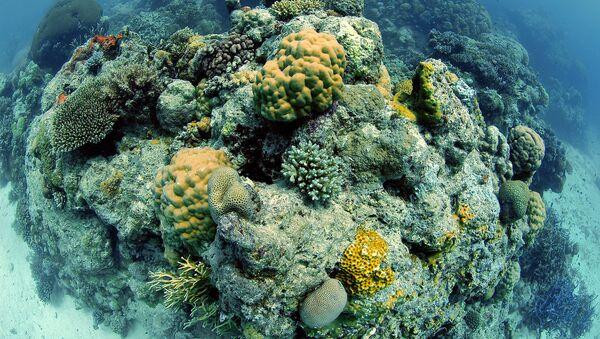 Parte de la Gran Barrera de Coral, en Australia - Sputnik Mundo