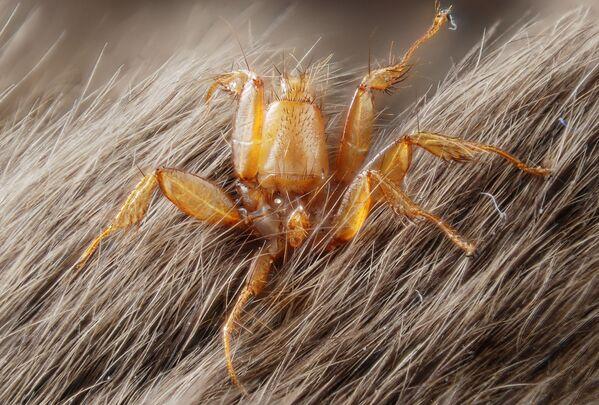 Moscas chupasangre y cuernos ensangrentados: estos son los animales más raros del mundo - Sputnik Mundo