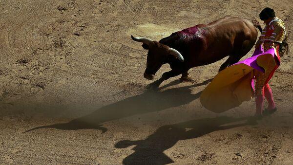 Un torero - Sputnik Mundo
