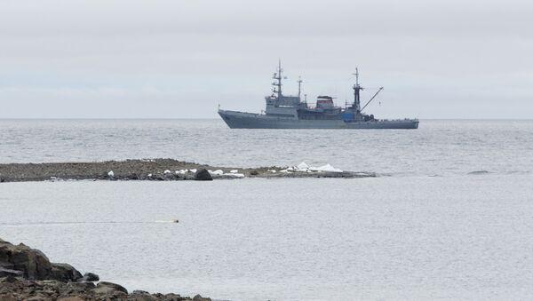 Altái, el barco de la expedición, con un oso nadando en primer plano - Sputnik Mundo
