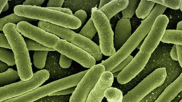 Bacterias (imagen referencial) - Sputnik Mundo