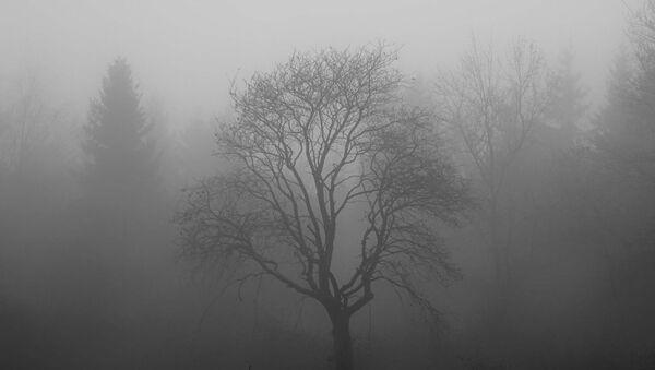 Un pantano en la niebla, imagen referencial - Sputnik Mundo
