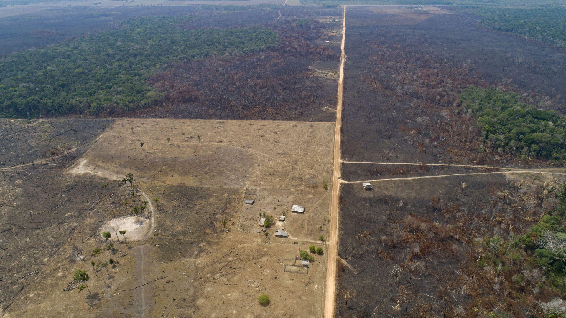 La deforestación en Amazonía - Sputnik Mundo, 1920, 10.02.2021