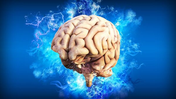 El cerebro humano, referencial - Sputnik Mundo