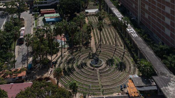 El huerto organoponico está ubicado en el corazón de Caracas - Sputnik Mundo