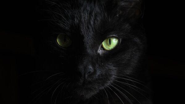 Un gato negro - Sputnik Mundo