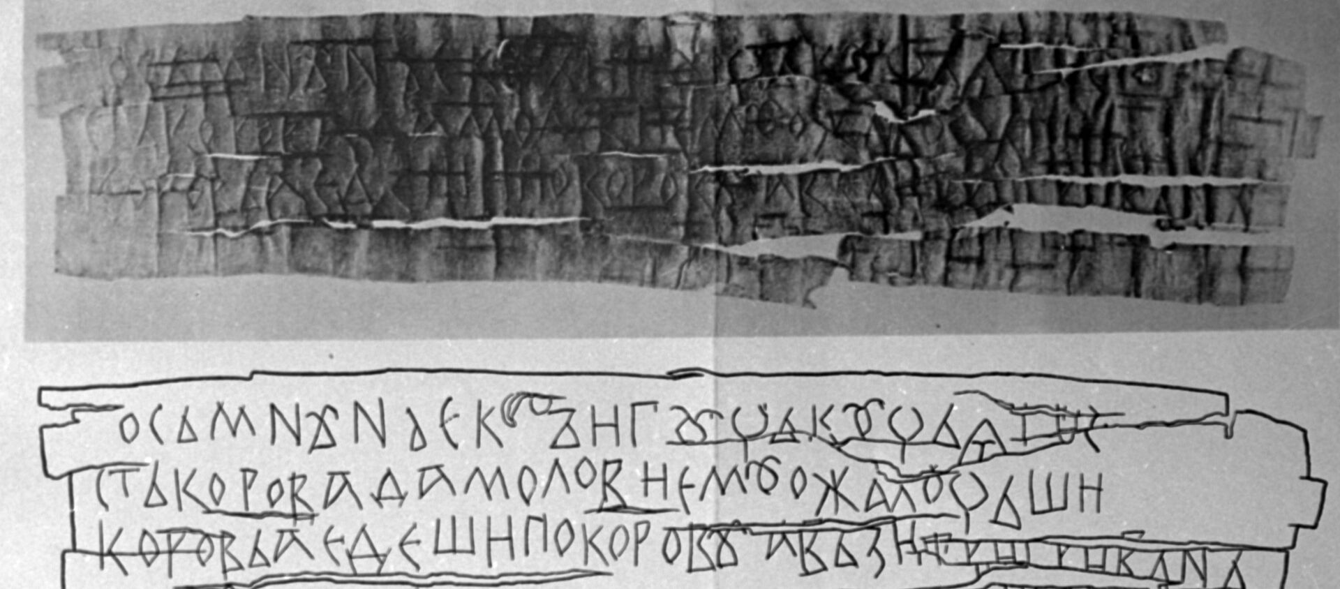 Carta de corteza de abedul sobre una vaca - Sputnik Mundo, 1920, 03.02.2020