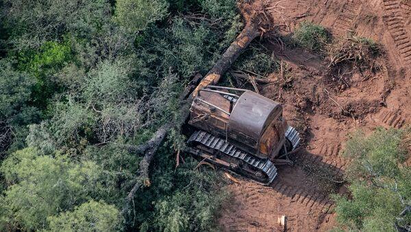 Topadoras derribando árboles en El Impenetrable, al norte de la provincia de Chaco, Argentina  - Sputnik Mundo