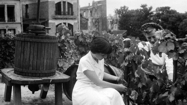 Mujeres cortando uvas para vino  - Sputnik Mundo