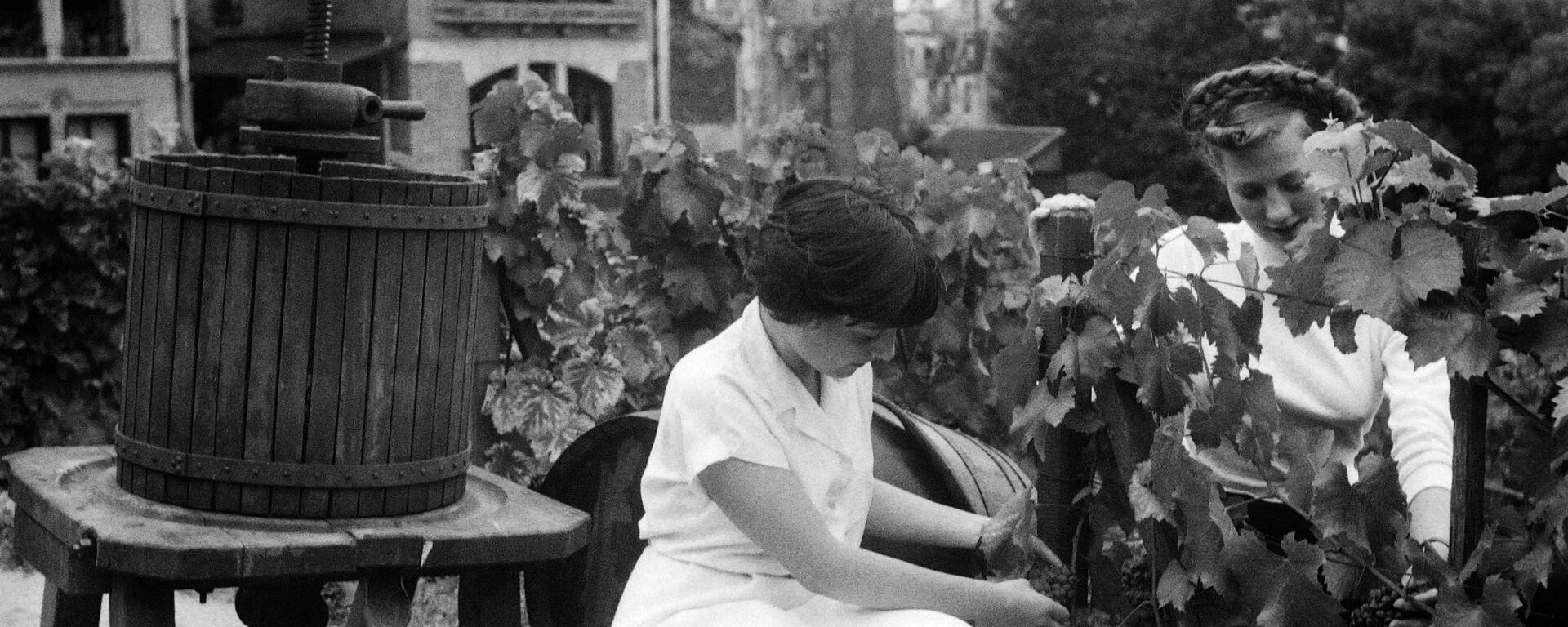 Mujeres cortando uvas para vino  - Sputnik Mundo, 1920, 14.02.2020