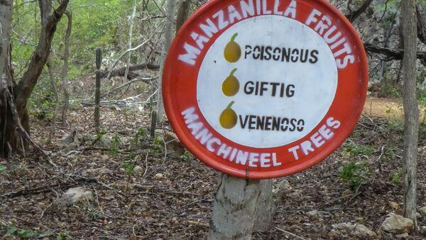 Advertencia sobre el árbol de Hippomane mancinella - Sputnik Mundo