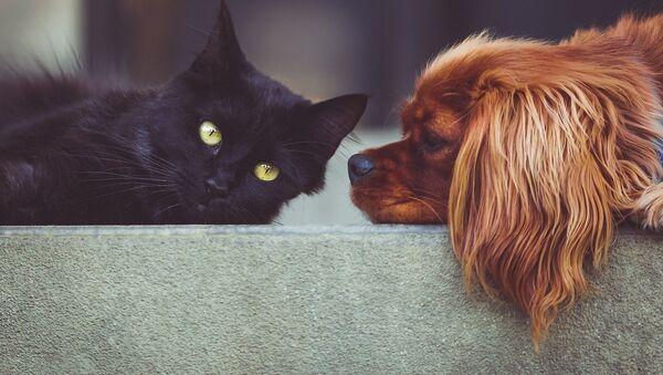 Un perro y un gato - Sputnik Mundo