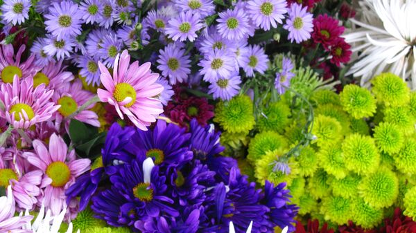 Flores en plena primavera (imagen referencial) - Sputnik Mundo