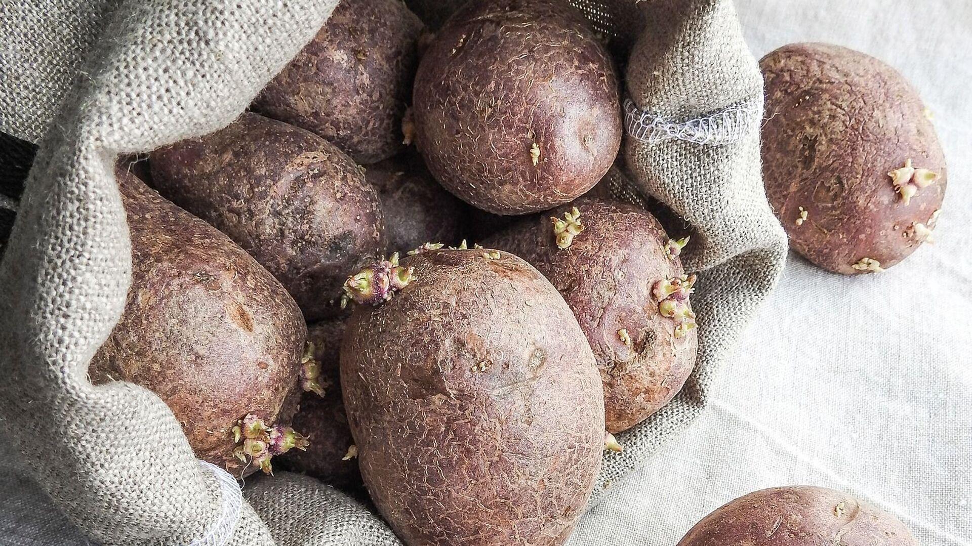 Patatas viejas - Sputnik Mundo, 1920, 03.08.2021